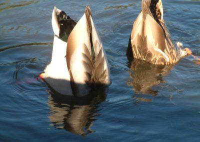 À propos (oiseaux sauvages) du Camping Canne de Bois à Hemmingford
